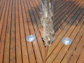 Pedana con palma particolare luci